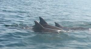 puerto escondido dolphins