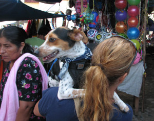 Best dog in galaxy at small mexican town mercado