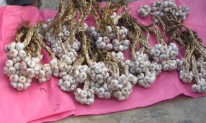 fresh garlic organic market mexico puerto escondido